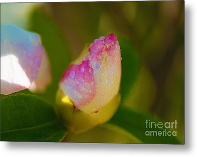 Rose Bud Metal Print by Cheryl Young