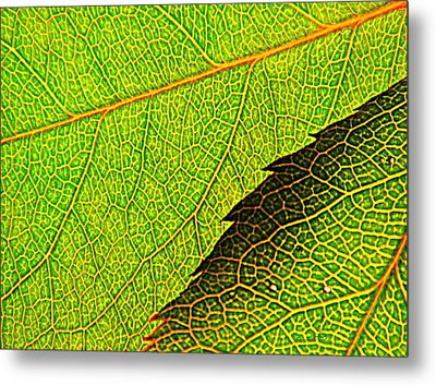 Rose Foliage Number Two Metal Print by Chris Berry