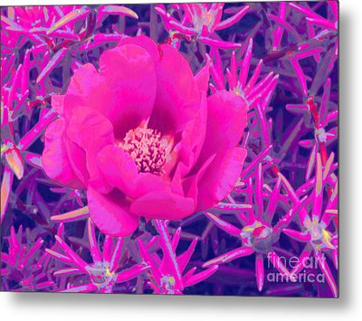 Rose Moss Single Metal Print by Margaret Newcomb