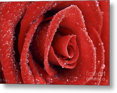 Rose Red  Metal Print by Tracy  Hall