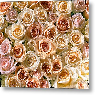 Roses 1 Metal Print by Mauro Celotti