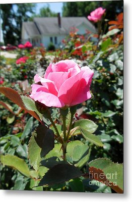 Roses Near A Country House Metal Print by Eloise Schneider