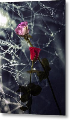 Roses With Coweb Metal Print by Joana Kruse