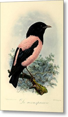 Rosy Starling Metal Print by J G Keulemans
