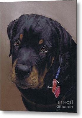 Rottweiler Dog Metal Print by Karie-Ann Cooper