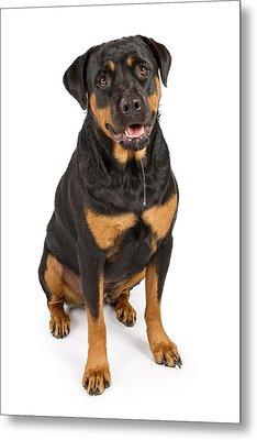 Rottweiler Dog With Drool Metal Print by Susan  Schmitz