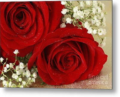Royal Velvet Roses Metal Print by Inspired Nature Photography Fine Art Photography