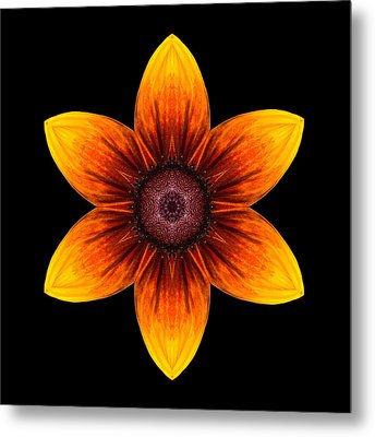 Rudbeckia I Flower Mandala Metal Print by David J Bookbinder