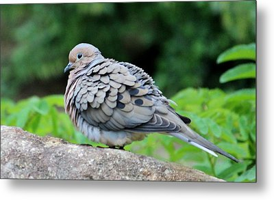 Ruffled Feathers Metal Print by Cynthia Guinn