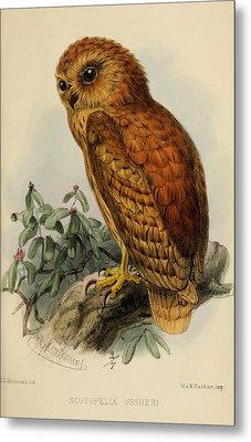 Rufous Fishing Owl Metal Print by J G Keulemans