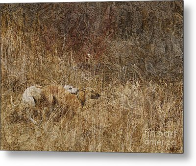 Run With Me Metal Print by Judy Wood