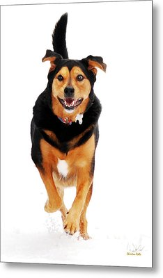 Running Dog Art Metal Print by Christina Rollo