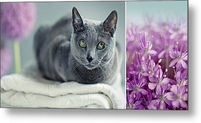 Russian Blue Collage Metal Print by Nailia Schwarz