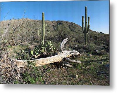Saguaro Skeleton Saguaro National Park Az  Metal Print by Brian Lockett