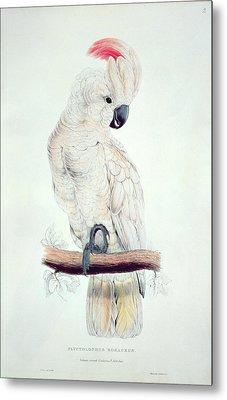 Salmon Crested Cockatoo Metal Print by Edward Lear