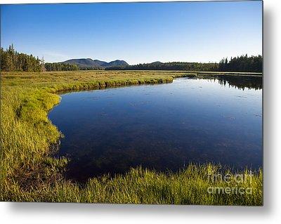 Salt Pond At Acadia Metal Print by Diane Diederich
