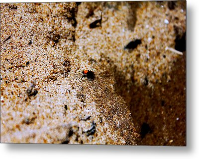 Sand Critter Metal Print by Sheryl Burns