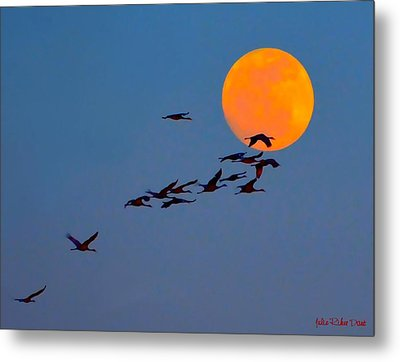 Sandhill Crane Migration Metal Print by Julie Dant