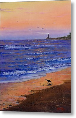 Sandpiper At Sunset Metal Print by C Steele