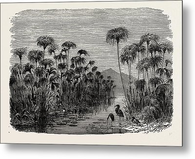 Scene On A Tributary Of The Nile Bulrushes Metal Print by Litz Collection