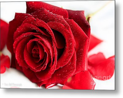 Scent Of A Rose Metal Print by Tracy  Hall