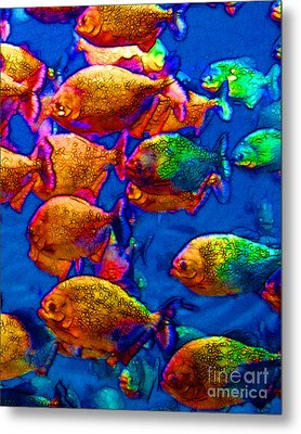 School Of Piranha V3 Metal Print by Wingsdomain Art and Photography