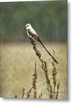 Scissortailed-flycatcher Metal Print by Betty LaRue