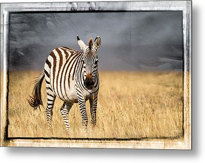 Scratched Tin Zebra Metal Print by Mike Gaudaur