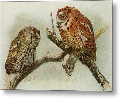 Screech Owls Metal Print by Louis Agassiz Fuertes