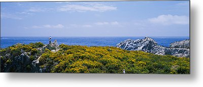 Sea Gulls Perching On Rocks, Point Metal Print by Panoramic Images