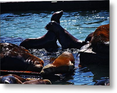Sea Lions In San Francisco Bay Metal Print by Aidan Moran