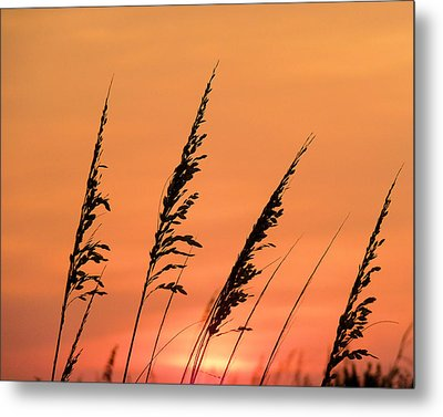 Sea Oat Sunset Metal Print by JC Findley