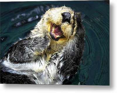 Sea Otter  Metal Print by Fabrizio Troiani