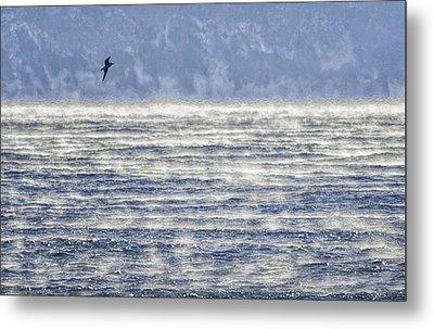 Sea Smoke And Gull Blues Metal Print by Marty Saccone