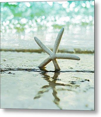 Sea Star Metal Print by Laura Fasulo