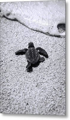 Sea Turtle Metal Print by Sebastian Musial