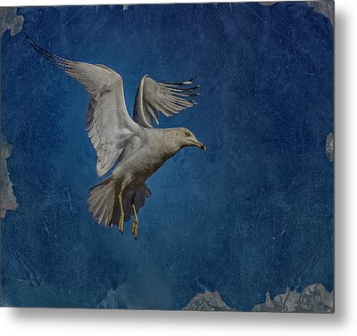 Seagull Metal Print by Ernie Echols