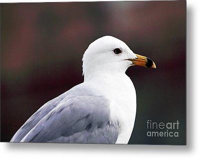Seagull Metal Print by John Rizzuto