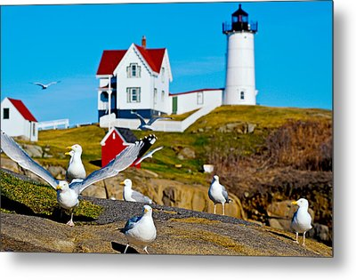 Seagulls At Nubble Lighthouse, Cape Metal Print by Panoramic Images