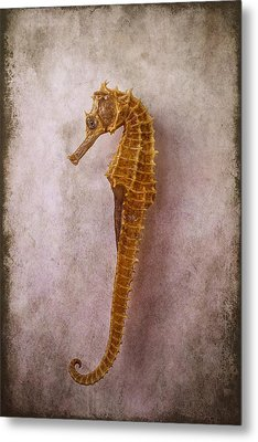 Seahorse Still Life Metal Print by Garry Gay