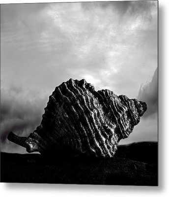 Seashell Without The Sea 2 Metal Print by Bob Orsillo