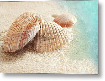 Seashells In The Wet Sand Metal Print by Sandra Cunningham