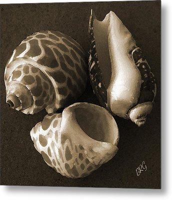 Seashells Spectacular No 1 Metal Print by Ben and Raisa Gertsberg