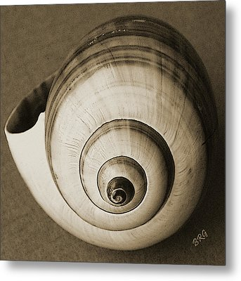 Seashells Spectacular No 25 Metal Print by Ben and Raisa Gertsberg