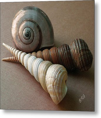 Seashells Spectacular No 29  Metal Print by Ben and Raisa Gertsberg