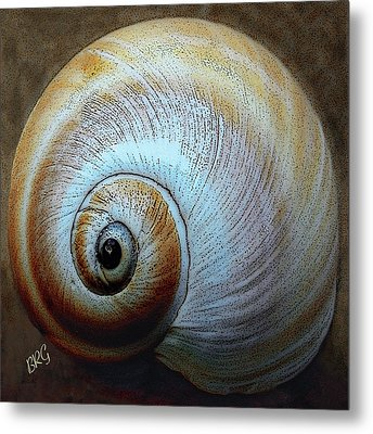 Seashells Spectacular No 36 Metal Print by Ben and Raisa Gertsberg