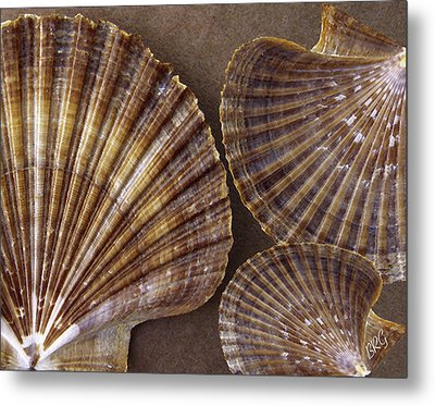 Seashells Spectacular No 7 Metal Print by Ben and Raisa Gertsberg