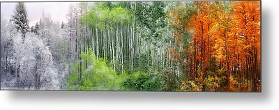 Seasons Of The Aspen Metal Print by Carol Cavalaris
