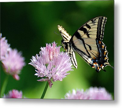 Second Nature Butterfly Metal Print by Christina Rollo