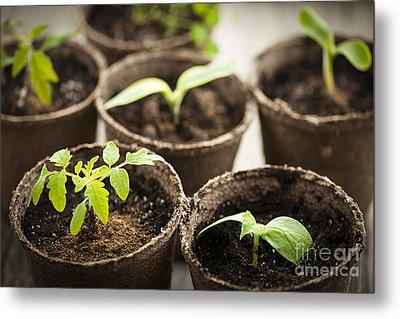 Seedlings  Metal Print by Elena Elisseeva